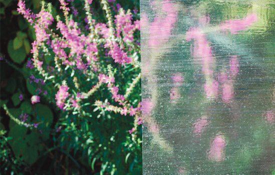 cny-Olseedy3